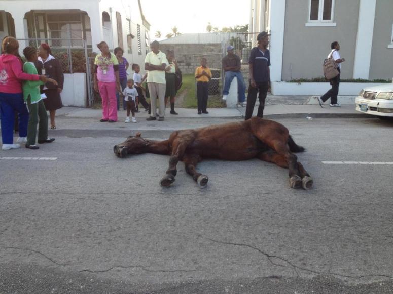 Surrey Horse Dies in the street 2012.